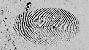 Fingerabdrücke Ninhydrin